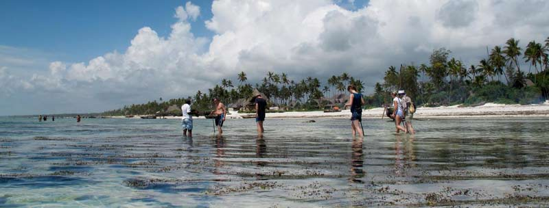 Matemwe-guests-reef-walk