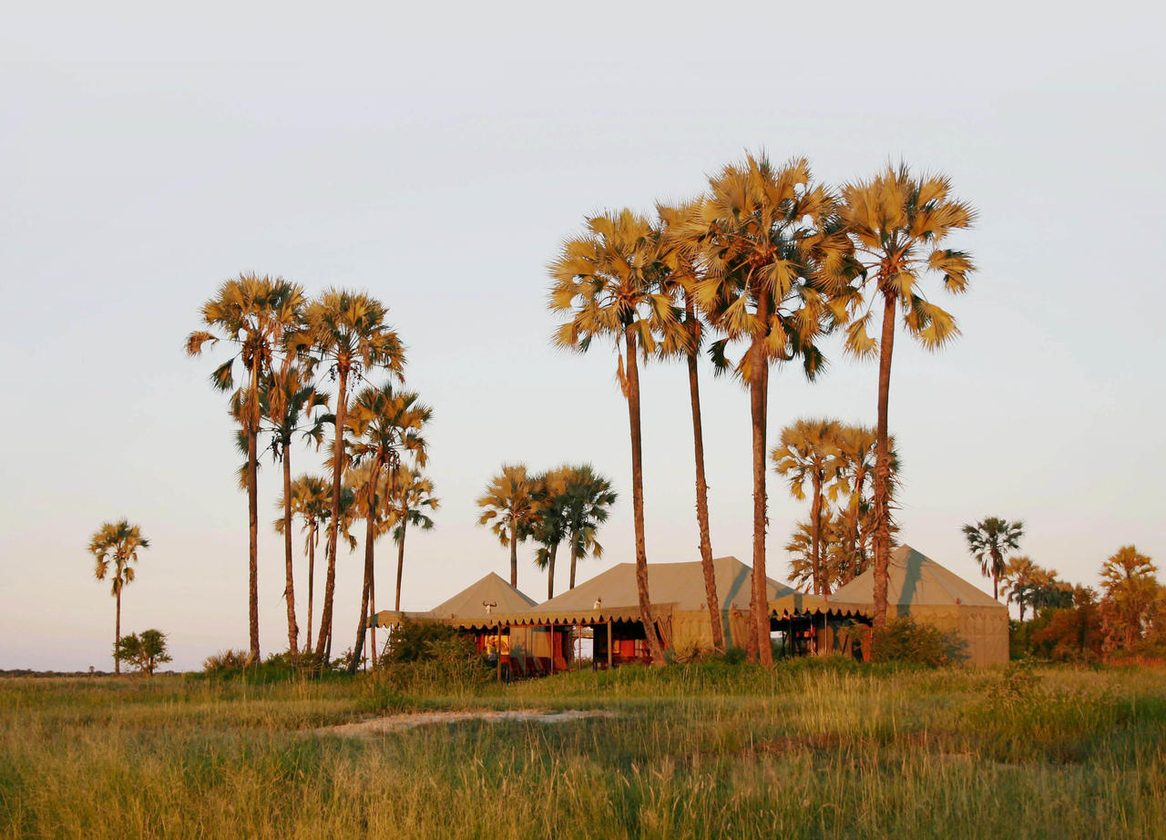 Luxury Botswana safari with Africa and You